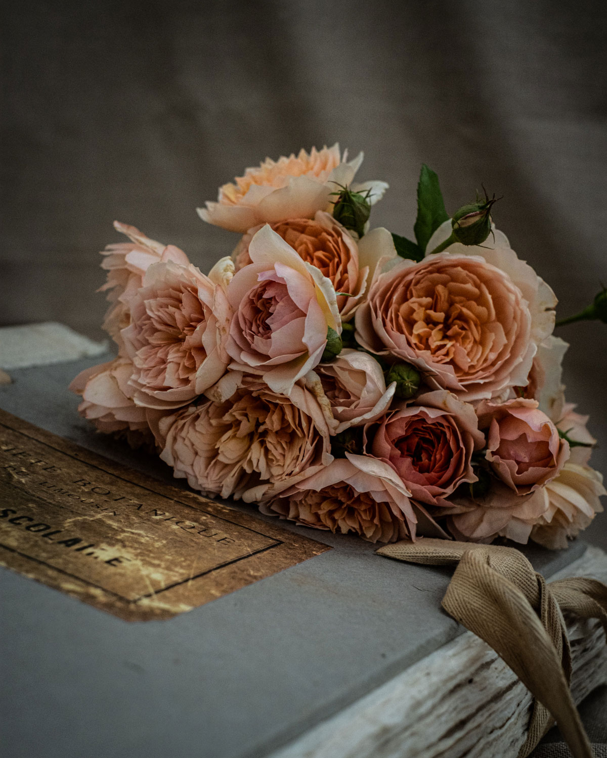Apricot-roses-and-book