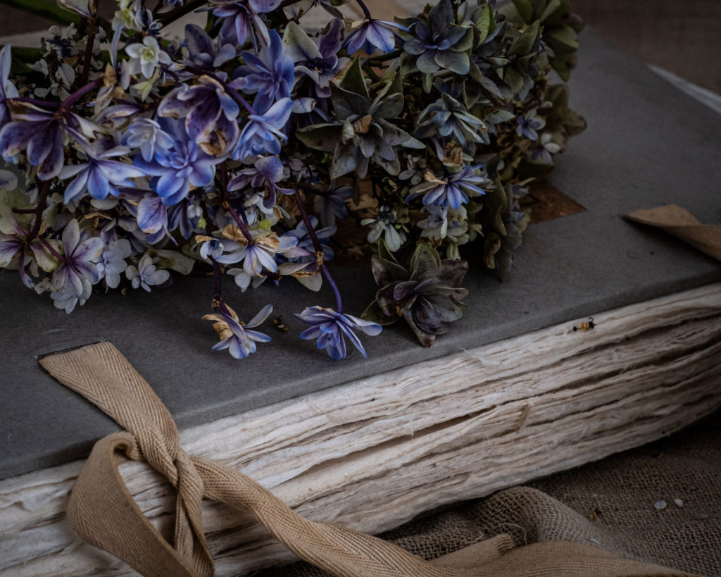 Hydrangeas and old book